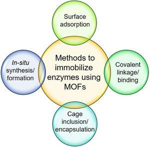A schematic representation of different immobilization methods to immobilize/encapsulate enzymes using MOFs.