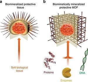 Schematic illustration of biomimetically mineralized MOF. (a) Schematic of a sea urchin&#59; a hard porous protective shell that is biomineralized by soft biological tissue&#59; (b) schematic of a MOF biocomposite showing a biomacromolecule (for example, protein, enzyme or DNA), encapsulated within the porous, crystalline shell.