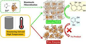 Scheme of the green synthesis of enzyme–MOF composites exhibiting tolerance for denaturing solvents and heat.