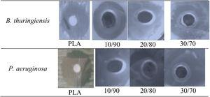 Comparison for the inhibition zones of PLA and PLA/FeHA samples.