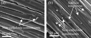 SEM images of steam-alkali treated fibres (specimen ST10-S10) showing higher surface roughness in (b) than (a) .[73]