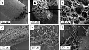 FE-SEM micrographs of (a) longitudinal section of raw sugar palm fibres, (b) cross section of raw sugar palm fibres, (c) primary, secondary cell wall and middle lamella, (d) bleached fibres, (e) alkali-treated fibres, and (f) refined fibres.