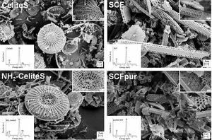 SEM micrographs of CeliteS and SCF before and after the amino-functionalisation and the purification, respectively (insets: (top) higher magnification SEM micrograph, (bottom) EDX spectrum).