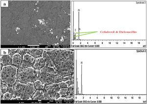 SEM/EDS micrographs of Al alloy with 1.5 Cefadroxil+1.5 Dicloxacillin inhibitor after (a) corrosion test and (b) weight loss experiment.