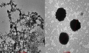 TEM images of AF treated composite.
