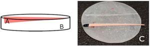 Schematic design of the homemade GP holder: (A) GP position indicated in pink, (B) acrylic resin holder and (C) image of the homemade sample holder with GP.