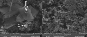 (a and b) SEM image of indigo-RGO/WO3.