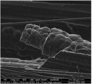 SEM images of fiber surface of SiCNFs-C/C composite.