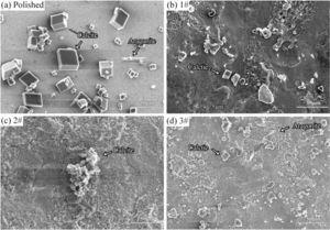 Fouling morphologies of the (a) polished, (b) 1#, (c) 2# and (d) 3# after anti-fouling experiments for 72h.