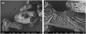SEM images of MHR rods after thermal treatment at (a) low and (b) high magnification.
