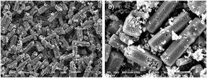 SEM images of MHR-S sample at (a) low and (b) high magnification.