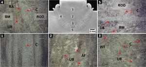 F45 condition macro and microstructures.