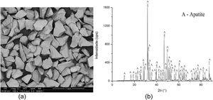 (a) SEM, backscattered electron images (BSE) and (b) XRD pattern for apatite sample.