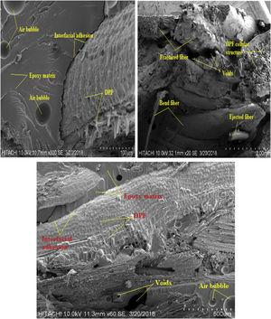 SEM images of tensile fractured sample of 50% DPF/epoxy composites.