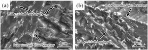 FESEM micrographs of specimens S1-2 (a) and S1-4 (b).
