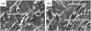 FESEM micrographs of specimens S1-11 (a) and S1-12 (b).