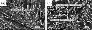 FESEM micrographs of specimens S2-1 (a) and S2-2 (b).