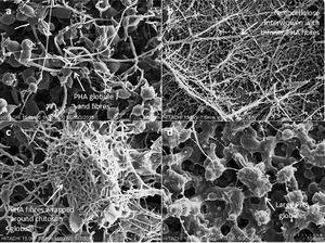 SEM micrograph of (a) PHA, (b) PHA2NCC, (c) PHA2Cts, and (d) PHA3NCC1Cts of the electrospun biocomposite at x600 magnification. The micrographs showed relatively good porosity of electrospun biocomposite membranes.