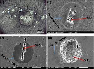 (a) Optical image of the fringed region in Figure 10b and (b)-(c) SEM images of the regions labelled 1, 2 and 3in.(a).