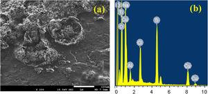 (a) SEM micrograph and (b) EDX profile analysis obtained for Ti–5%Al–20%Cu alloy after 48h immersion in 3.5% NaCl solutions.