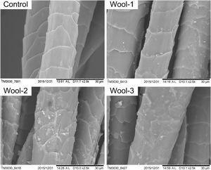 SEM micrographs of the wool fabrics.