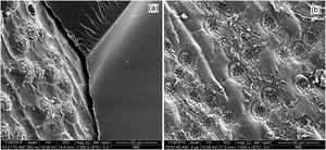 Delamination mechanism (a) interfacial failure between fiber and matrix and (b) imprinted surface of piassava fiber on the epoxy matrix after fiber complete separation.