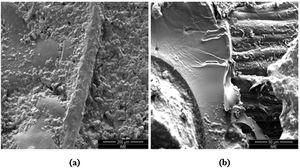 SEM micrograph of the fracture for a 40vol% fique fabric composite with (a) 400× and (b) 1,500× of magnification.