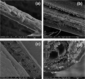 SEM micrographs of buriti fiber: (a) surface (25×); surface (300×); surface (800×) and (d) fractured cross-section (1200×).