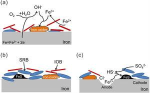 Schematic representation of corrosion mechanism by mixed SRB+IOB at different stages: (a) accumulation of iron oxides initiated by DO and IOB activity, (b) formation of mixed species biofilm, and (c) formation and propagation of pits.
