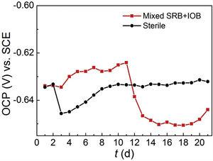 Variations of the OCP with time in sterile and mixed SRB+IOB media.