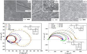 Surface morphology of the conversion coatings obtained in the vanadate solution (19.7mM) with addition of (a) 0, (b) 4.61 and, (c) 23mM Ce solution. Nyquist plots of (left) uncoated AZ31 alloy and (right) Ce–V conversion coated alloy in 3.5wt.% NaCl [133].