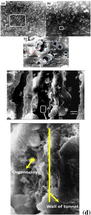 The irregular membrane pores opened with 35-3 mm as the organogly was a strong adhesive in the tunnel wall, this tunnel is responsible for the purification of the water. SEM image with magnification (a) 35×, 75× (b) and 1500× (c) while (d) cross-section image 1500×.