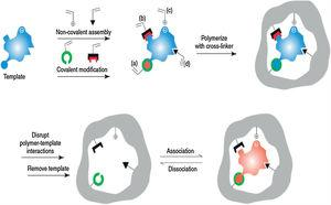 Specific mechanism for the sorption of toxins onto molecularly imprinted nanomaterials.