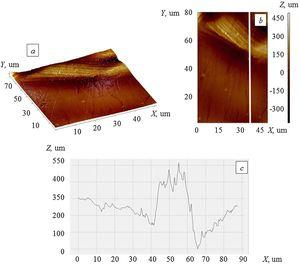 Structure on the border of the ZnO-Ag coating with a copper substrate, revealed by atomic force microscopy. (а) 3D distribution of uneven relief in height, (b) secant position (top view), (c) roughness distribution along the base length.