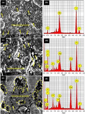 (a) SEM image of the Ti50Nb50 composite; (b) EDS spectrum of the Ti50Nb50 composite; (c) SEM image of the Ti50Nb40HA10 composite; (d) EDS spectrum of the Ti50Nb40HA10 composite; (e) SEM image of the Ti50Nb30HA20 composite; (f) EDS spectrum of the Ti50Nb30HA20 composite.