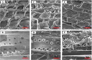 Internal microscopic morphology of unmodified Chinese fir wood, PFOMCF and SSMCF.