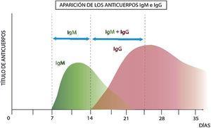 Perfil inmunológico teórico en una infección viral.