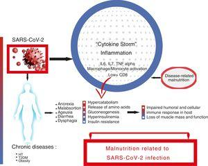 "Relationship between SARS-CoV-2 infection, inflammation, and onset of malnutrition. The infection of a patient, who may have previous chronic diseases, gives rise to a ""cytokine storm"" which, due to various mechanisms, triggers the onset of malnutrition."