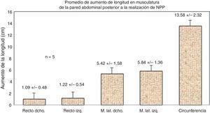 Se muestra el aumento de la longitud de los grupos musculares después del NPP. Los grupos laterales del abdomen son los que presentan mayor elongación.