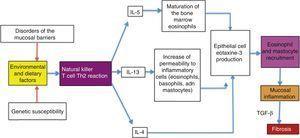 Physiopathogenesis of eosinophilic esophagitis.