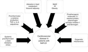 Mechanisms involved in the pathophysiology and progression of cardiovascular disease in patients with non-alcoholic fatty liver disease (NAFLD).