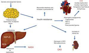 Pathophysiologic interactions that link cardiovascular disease (CVD), chronic kidney disease (CKD), and other complications observed in non-alcoholic fatty liver disease (NAFLD). GFR: glomerular filtration rate; HDL-C: high density lipoprotein cholesterol; LDL-C: low density lipoprotein cholesterol; NASH: non-alcoholic steatohepatitis; ROS: reactive oxygen species.
