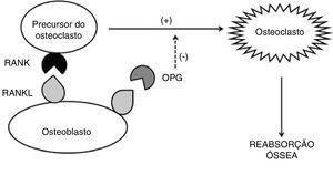 Esquema da ação do RANKL, RANK e OPG no processo de regulação da osteoclastogênese e reabsorção óssea.