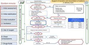 Algorithm for the resuscitation of term newborns.