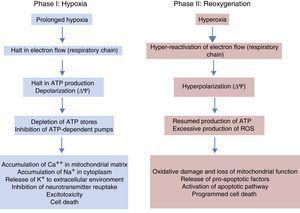 Phases of hypoxic-ischaemic encephalopathy.
