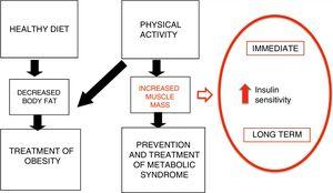 Mechanisms of PA in the prevention and treatment of obesity (adapted from Brambillia et al14).