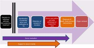 Stages of the process of controlled paediatric donation after circulatory death (adapted from Thuong et al.8).