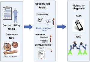 Relevant advances in the diagnostic approach to allergy. The history-taking and cutaneous tests have been the essential tools for diagnosis from the beginning. In recent years, new diagnostic methods have been developed. The figure shows examples of commercial tests that allow qualitative and quantitative detection of specific IgE as well as developed molecular diagnostic tools (ALEX®, ISAC®) developed more recently to assess sensitivity to a large number of allergen components.