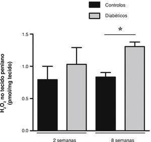 Medição local da produção de H2O2 no tecido peniano dos ratos diabéticos de 2 e 8 semanas e respetivos controlos emparelhados pela idade. Os resultados revelaram que a libertação de H2O2 no tecido peniano de 2 semanas de diabetes não se alterou, quando comparado com os controlos; e demonstraram um aumento significativo para os níveis de H2O2 penino na fase estabelecida da diabetes relativamente aos respetivos controlos. Dados expressos como valores médios ± SE. * p < 0,05.