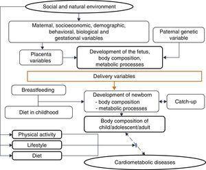 Explanatory model – cardiometabolic diseases.